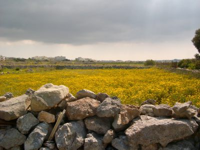 flowers meadow field malta spring blooming summer flowering growing Malta's Victoria Lines